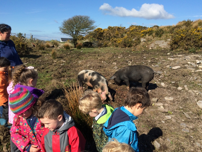 The pigs snorted a lot and sniffed around us.